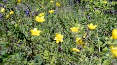Meadow with wild flowers in spring Stock Footage