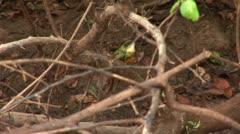 Brazil: Amazon river region birds 2 Stock Footage