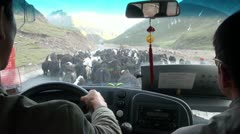 Tibet China driving vehicle shot yaks blocking road animals livestock Stock Footage