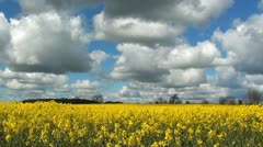 RAPESEED Stock Footage