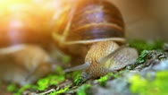 Snail closeup in the rays of sun. Stock Footage