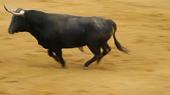 Powerful spanish bull, bullfight arena Stock Footage