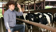 Cowboy and Cows Stock Footage