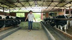 Farmer and Cows Stock Footage