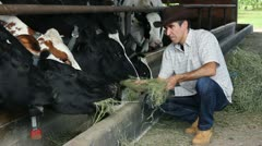 Farmer feeding cows Stock Footage