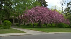 Architecture, stately home behind blooming trees Stock Footage