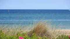 View over the dune grass on the German Baltic coast in Heiligendamm Stock Footage