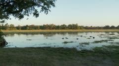 Okavango Delta Landscape - stock footage