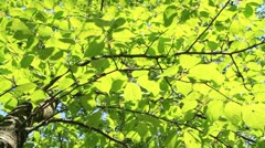 Green tree. Stock Footage