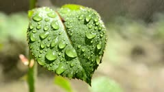 Close up of waterdrops on leaf surface Stock Footage