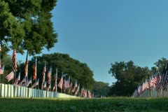 Flags displayed in military cemetery in early morning breeze Stock Footage