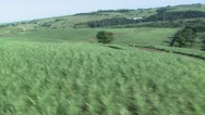 Aerial of green sugarcane fields Stock Footage