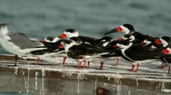 Birds wildlife mexico Stock Footage