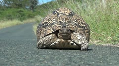 Tortoise walking on the road Stock Footage