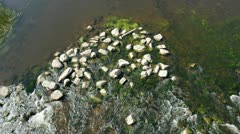 River water and stones with green algae background Stock Footage
