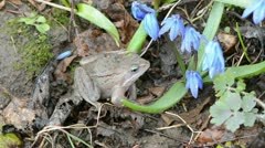 Frog european common and wind in the flowers Stock Footage