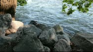 Stock Video Footage of Rocky river bank and pretty flowing water