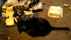 Homeless cat Stock Footage