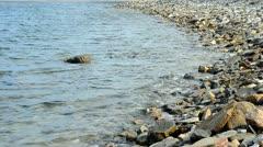 Stony beach in Delos Greece Stock Footage