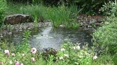 Rain on pond Stock Footage