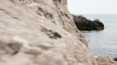 Crimea cormorants resting on the rocks, Crimea, Slider - stock footage