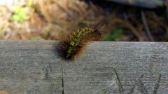 Caterpillar Crawling On Board Stock Footage