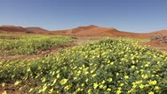 Stock Video Footage of Tracking shot of flowers in desert