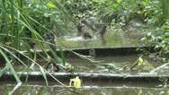 Flying Flock of Funny Sparrows Playing in Creek, River Water, Bathing, Drinking Stock Footage