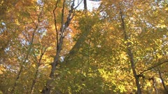 Fall Colours Stock Footage