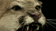 1440 Taxidermy 10 Stock Footage