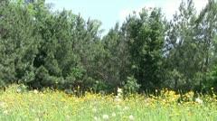 Overgrown Field Stock Footage