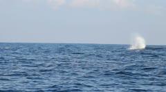 Blue Whale Fluke Stock Footage