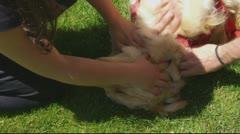 Happy dog 02 - stock footage