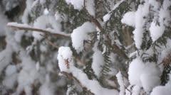 Snowfall on cedars Stock Footage