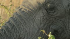 E.C.U. Elephant's face - stock footage