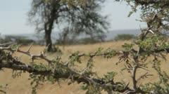 Safari vehicle traveling - stock footage