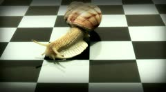 Snail on a chessboard Stock Footage
