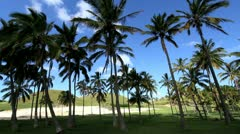 Anakena Beach palm trees on Easter Island Stock Footage