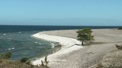 Tree growing on a limestone beach next to the Baltic sea in Sweden Stock Footage