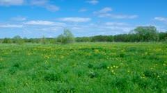 Field of dandelions,blue sky and sun. Stock Footage