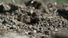 Ant colony _1 Stock Footage