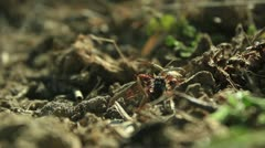 Ant colony (dealing with the intruder) _4 Stock Footage