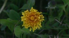 Flowers awaken Stock Footage