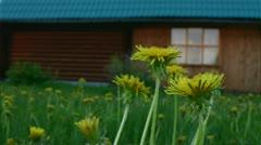 Stock Video Footage of flowers awaken