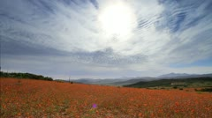 HDR Landscape shot of Namaqualand in Flower Season, South Africa GFHD Stock Footage