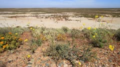 Desolate Landscape shot of The Knersvlakte, South Africa GFHD Stock Footage