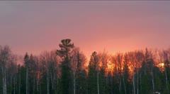 Taiga at sunset (Siberia) Stock Footage