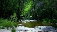 Stock Video Footage of Stream Running Through Forest In Sierra Nevada Foothills