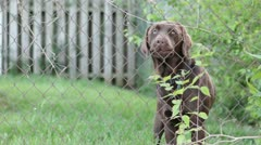 Dog standing behind fence barks Stock Footage