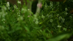 Gardening garden weeding plant planting trim trimming Stock Footage